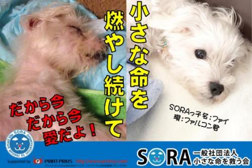 保護犬用シェルター兼ケア施設増設と重篤な保護犬の医療費にお力添え下さい