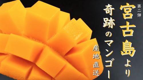 産地直送!沖縄県宮古島産「奇跡のマンゴー」をお届け。売上一部を観光協会へ。第2弾