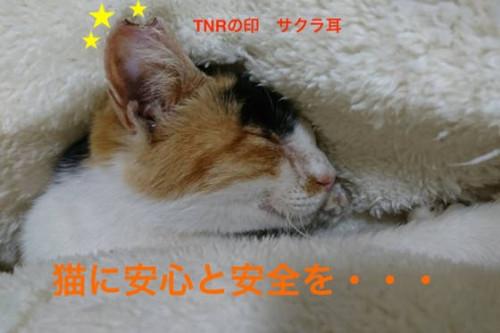 伊勢保健所ボランティアの願い!保護猫シェルターを完成させたい!