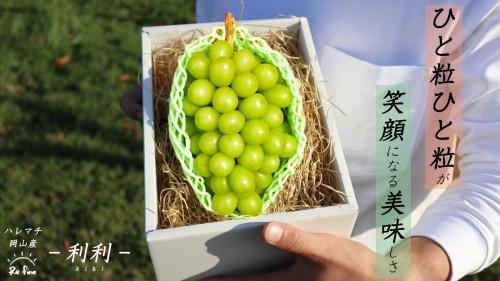 再生農業プロジェクト!!『晴れの国』岡山から産地直送!本場のシャイン&ピオーネ!