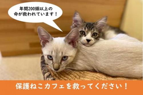平塚の飼い主のいないねこちゃん達を減らす活動を継続したい!