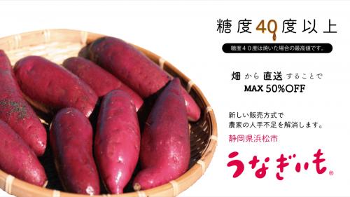 新提案!畑から直送で美味しくてお買い得なサツマイモをご提供します